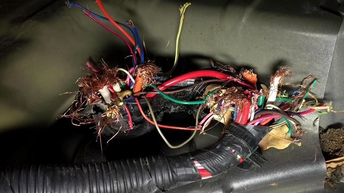 Ống dẫn xăng bị đứt do chuột cắn