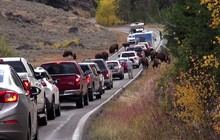 Điểm danh 12 luật lệ giao thông độc và lạ nhất trên thế giới